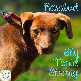 Border Collie Mix Dog for adoption in Washburn, Missouri - Rosebud