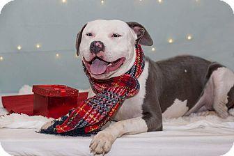 Terrier (Unknown Type, Medium) Mix Dog for adoption in Flint, Michigan - Ollie - RTO