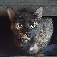 Adopt A Pet :: Elsa - Salem, OH