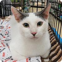 Adopt A Pet :: .Kayleigh - Ellicott City, MD