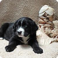 Adopt A Pet :: Charmin - Foster, RI