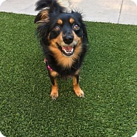 Adopt A Pet :: Reese - Coppell, TX