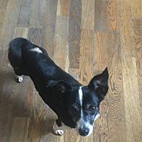 Adopt A Pet :: Donna - Long Beach, CA