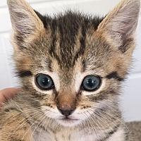 Adopt A Pet :: Charlotte - Midvale, UT
