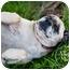 Photo 4 - Mastiff Dog for adoption in Broomfield, Colorado - Grace