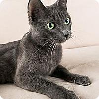 Adopt A Pet :: Bella - Eagan, MN
