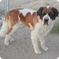 Adopt A Pet :: Charlie - Sparks, NV
