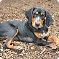 Adopt A Pet :: *Otis - PENDING - Westport, CT