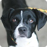 Adopt A Pet :: Scooby - Canoga Park, CA