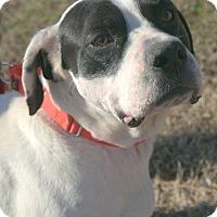 Adopt A Pet :: Gomez (MRHS) - Brattleboro, VT