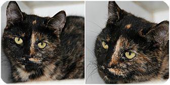 Domestic Shorthair Kitten for adoption in Forked River, New Jersey - Graffitti