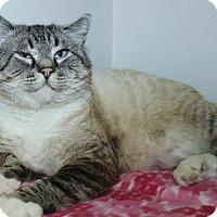 Adopt A Pet :: Chuck - Grass Valley, CA