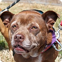 Adopt A Pet :: Mellie **ADOPTION FEE WAIVED** - Berkeley, CA