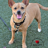 Adopt A Pet :: Sammie - Youngwood, PA
