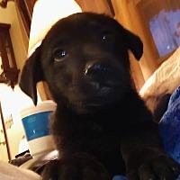 Adopt A Pet :: Sammi - Okmulgee, OK