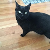Adopt A Pet :: Ace (Bonded Pair!) - Somerville, MA