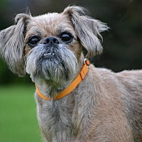 Adopt A Pet :: Sissy - Hagerstown, MD