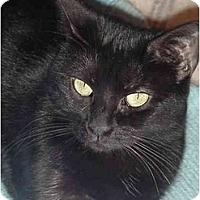 Adopt A Pet :: Whitney - Chesapeake, VA