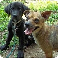 Adopt A Pet :: Valneer - Allentown, PA