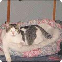 Adopt A Pet :: Dick - Montreal, QC