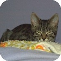 Adopt A Pet :: K-Willow4-Dublin - Colorado Springs, CO