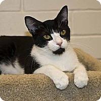 Adopt A Pet :: Marleigh - New Port Richey, FL