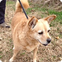 Adopt A Pet :: LEXIE/part of bonded pair - Bedminster, NJ