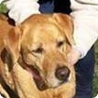 Adopt A Pet :: AUTUMN - San Diego, CA
