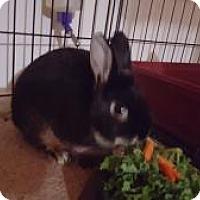 Adopt A Pet :: Titus - Conshohocken, PA