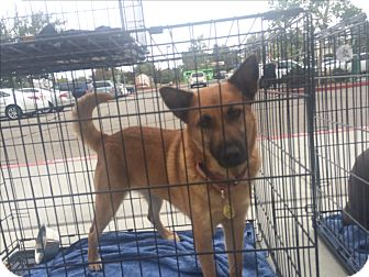 German Shepherd Dog Mix Dog for adoption in Winchester, California - Shiloh