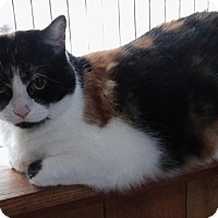 Adopt A Pet :: Snickers (front de-clawed) - Witter, AR