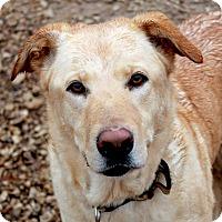 Adopt A Pet :: Henry - Waco, TX