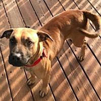 Adopt A Pet :: Genny - West Allis, WI