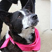 Adopt A Pet :: Kristen - Sparta, NJ