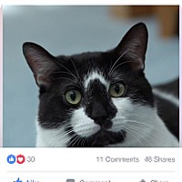 Adopt A Pet :: Spaz - Albany, NY