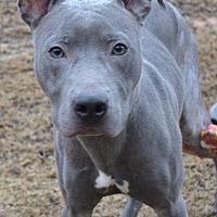Adopt A Pet :: Leo - Dallas, GA
