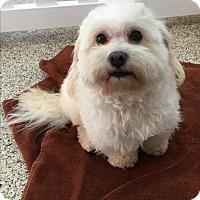 Adopt A Pet :: Micah - Thousand Oaks, CA