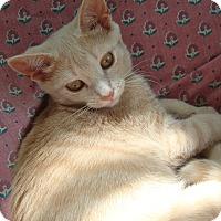 Adopt A Pet :: Andrea - Toronto, ON