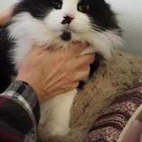Adopt A Pet :: Buster - Alpena, MI