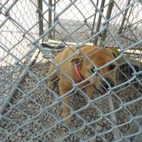 Adopt A Pet :: liza - Opelousas, LA