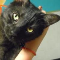 Adopt A Pet :: DUKE - Franklin, NC