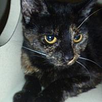 Adopt A Pet :: Miss Marbles - Hamburg, NY