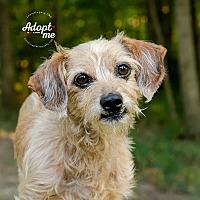 Adopt A Pet :: Trip - Cincinnati, OH