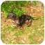 Photo 4 - Dachshund Dog for adoption in Bryan, Texas - McClintock