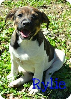 Cattle Dog Mix Dog for adoption in Laplace, Louisiana - Rylie