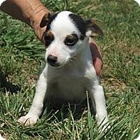Adopt A Pet :: Badger~meet me~ - Westbrook, CT