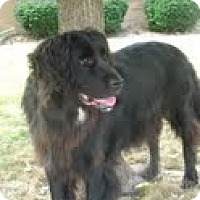 Adopt A Pet :: Big Easy - Lewisville, IN