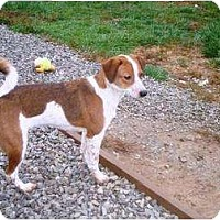 Adopt A Pet :: Puppy 2 - Irvington, KY