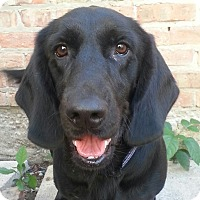 Adopt A Pet :: Dugger*ADOPTED!* - Chicago, IL