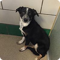 Adopt A Pet :: Kenosha - Denver, CO